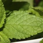 Verse kruidenwijzer vol handige tips en makkelijke recepten