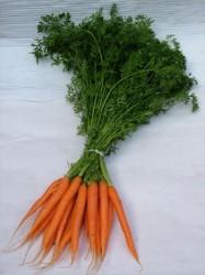verschil bospeen wortel