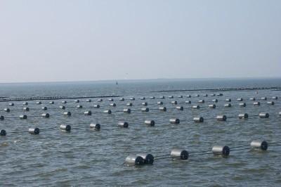 MZI's voor de kust