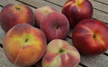Perzik en Nectarine