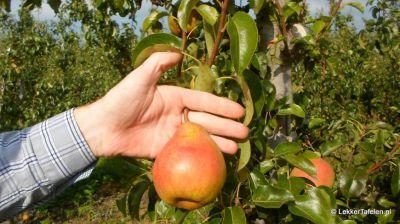 appels-peren-plukken_4034