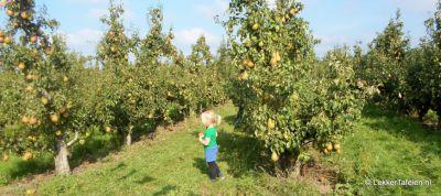 appels-peren-plukken_4036