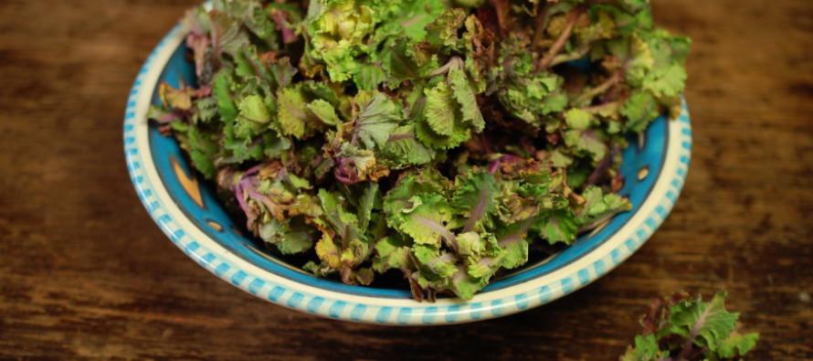 Ontdek flower sprouts - groenten