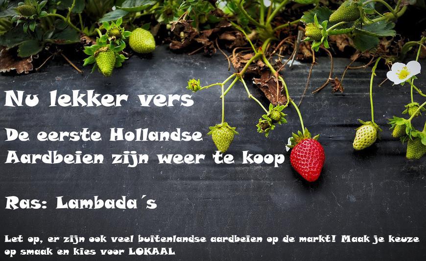 Hollandse Aardbeien seizoen