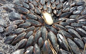 Ontdekkingstocht op Île d'Oléron, mosselen en oesters