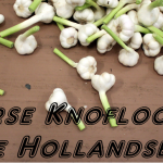 Verse knoflook, uit de Noord-Hollandse klei