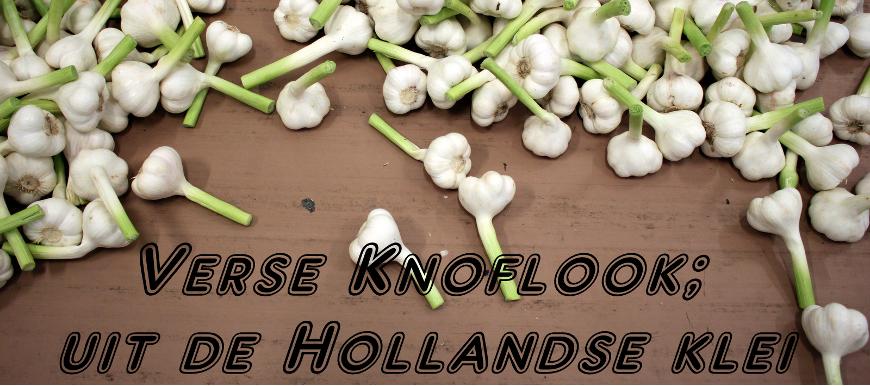 Hollandse Verse Knoflook-Biesheuvel