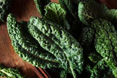 palmkool of cavalo nero