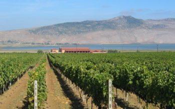 Griekse wijnen, meer dan Retsina alleen