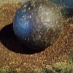 Groningse mosterd; dat moet een beetje grover zijn