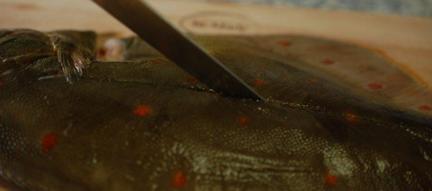 Schol fileren (en andere platvissen)