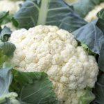 Bloemkool; Zes eenvoudige recepten met een alledaagse groente