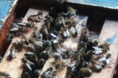 Imker - bijen