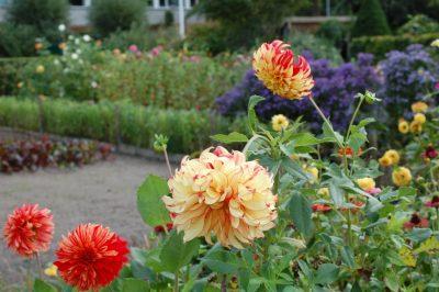 imker - bloemenpracht