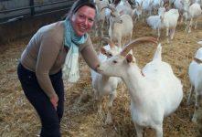 Le Guigne Chèvre in Vérines; heerlijke geitenkaas van de boer