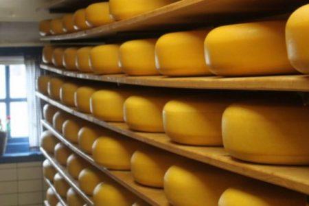 goudse-boeren-kaas-haastrecht-twee-hoeven_7236-001-890x395_c