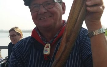 Oosterschelde paling; Gerookt op eikenhout. Een delicatesse
