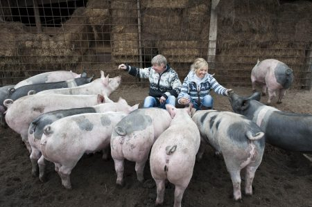 Samen een koe kopen varkensboerderij-2