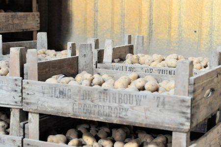 Aardappelteelt; kiemen en aardappels poten header