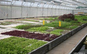 PuurGroenten; Eetbare bloemen, Kruiden, Mini-Groenten om te ontdekken