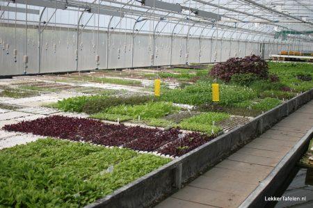 PuurGroenten Middenmeer Noord-Holland Mini Groenten Eetbare bloemen en Kruiden 7542