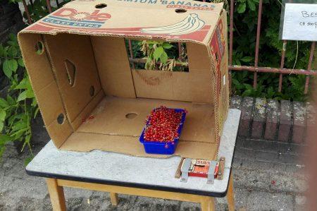 rode bessen aalbessen