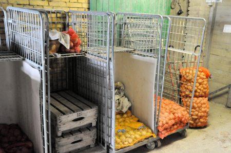 Aardappelen nieuwe oogst te koop