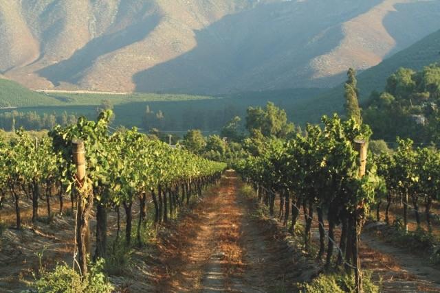 wijnen uit Zuid-Amerika