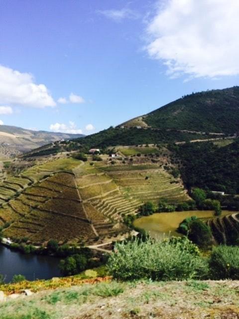 Wijngaarden Douro Port