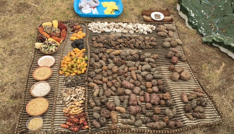 Aardappel Peru evenement