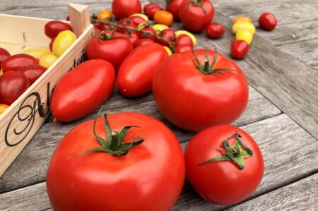 Vleestomaten en gewone tomaten